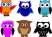 sell you 6 Owl Vector Illustrations