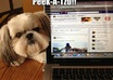 share your pet content to my Facebook Fan Page of 60K+ fans