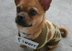 take a picture of my Pughuahua in a sweater, with your message