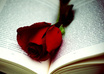Book_with_rose