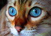 give you 700 beautiful photos of cats and other animals that you will love great for art inspiration, graphics, banners, logos website, blog