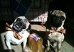 let you use my pugs for photo op for greeting card