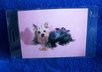 mail you 2 Girlie Yorkshire Terrier dog luggage tags small1