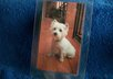 mail you 2 West Highland White Terrier dog luggage tags small1