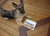 take incredible pictures of my dog holding your message, website, logo, fan sign or whatever you like