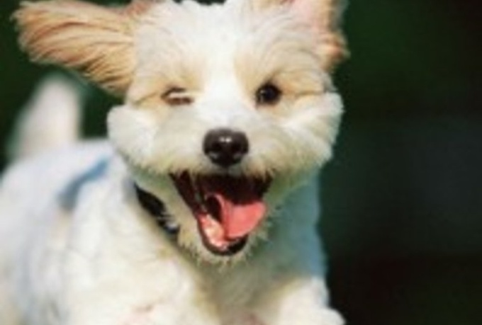 Cute Smiling Dog